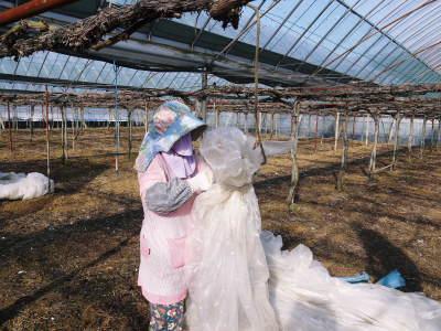 熊本ぶどう 社方園 ハウスの内張り作業を熊本農業高校からの農業実習と共に行っています(2020)前編_a0254656_17193721.jpg