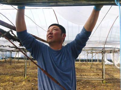 熊本ぶどう 社方園 ハウスの内張り作業を熊本農業高校からの農業実習と共に行っています(2020)前編_a0254656_17213289.jpg