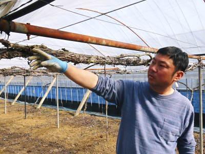 熊本ぶどう 社方園 ハウスの内張り作業を熊本農業高校からの農業実習と共に行っています(2020)前編_a0254656_17244893.jpg