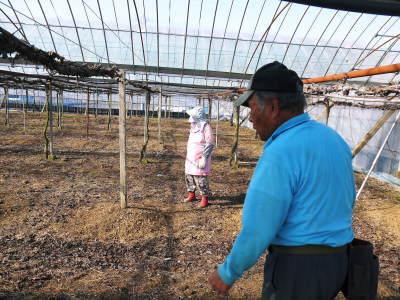 熊本ぶどう 社方園 ハウスの内張り作業を熊本農業高校からの農業実習と共に行っています(2020)前編_a0254656_17493444.jpg