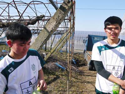 熊本ぶどう 社方園 ハウスの内張り作業を熊本農業高校からの農業実習と共に行っています(2020)前編_a0254656_17531147.jpg