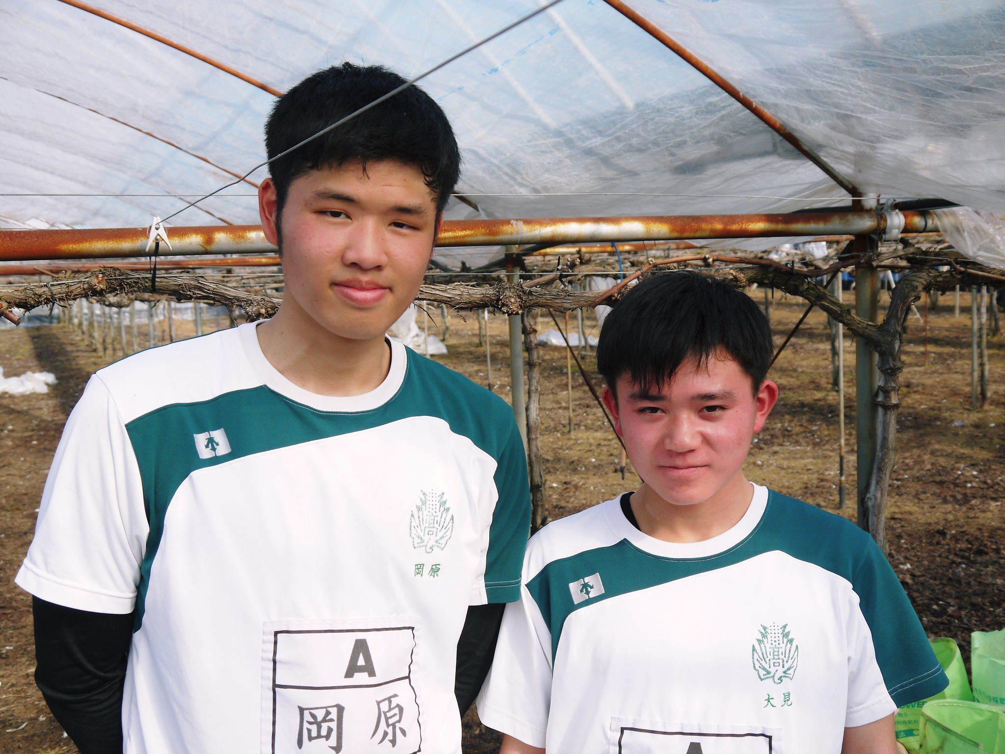 熊本ぶどう 社方園 ハウスの内張り作業を熊本農業高校からの農業実習と共に行っています(2020)前編_a0254656_17555504.jpg