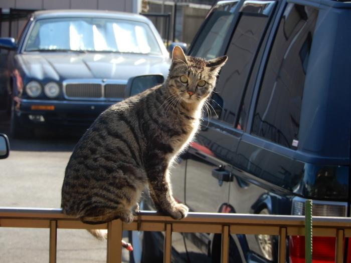 迷子の猫ちゃん出ておいで~!_c0143772_11110999.jpg