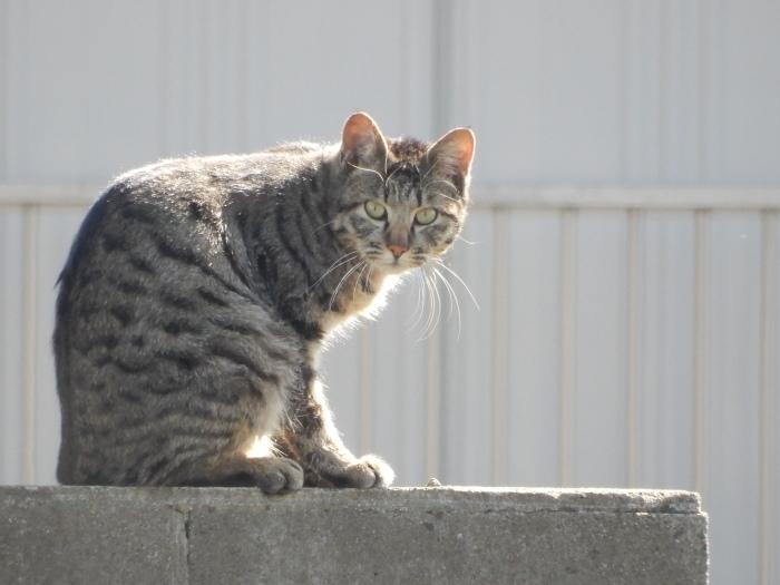 迷子の猫ちゃん出ておいで~!_c0143772_11113293.jpg