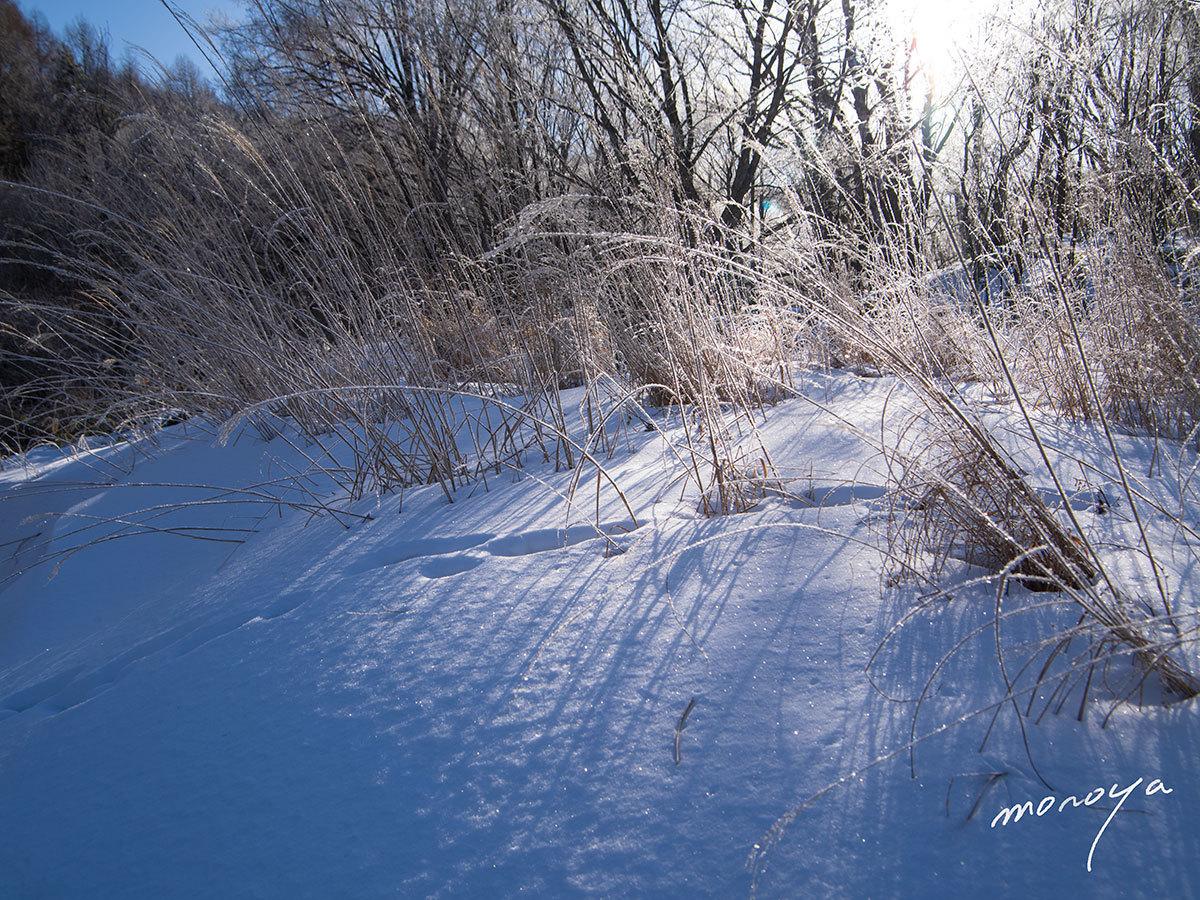 雪の晴れ日_c0085877_06301391.jpg
