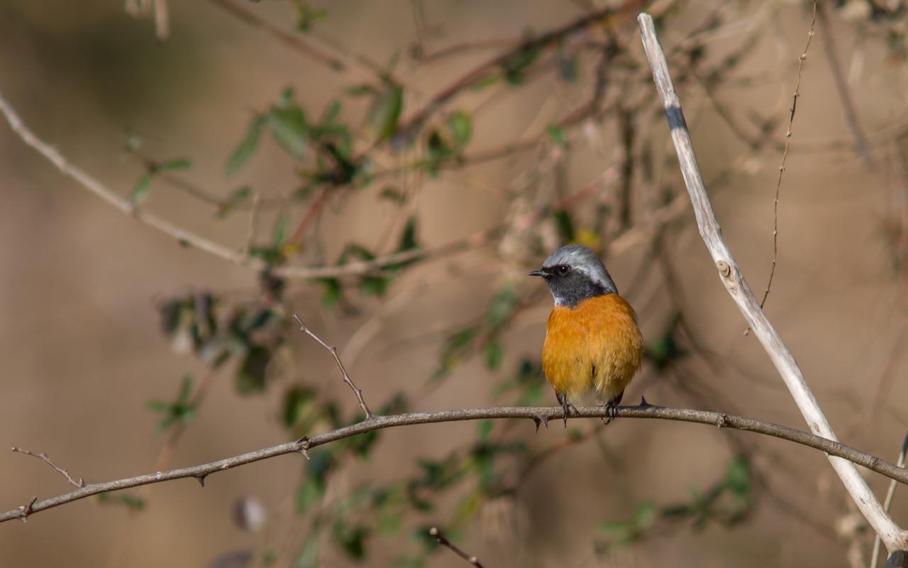 河川敷で見た鳥さん_a0052080_20311298.jpg