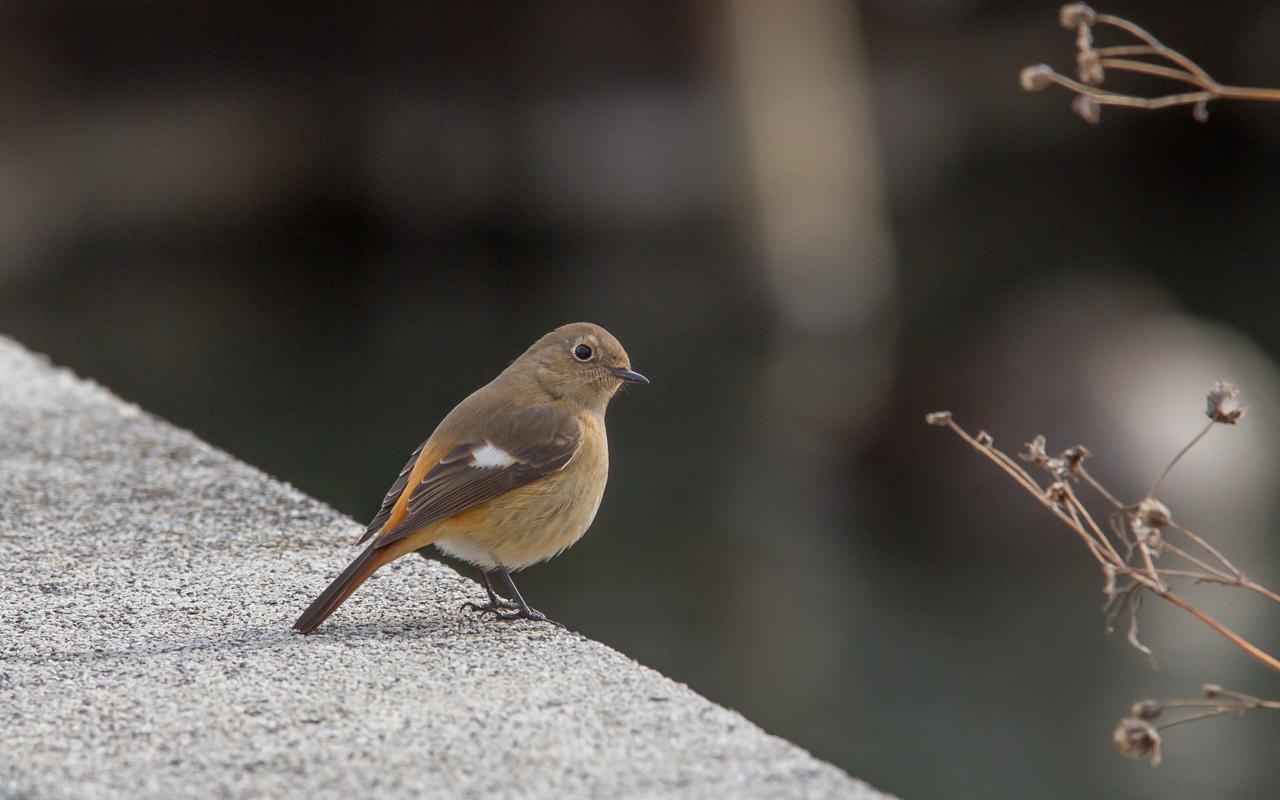河川敷で見た鳥さん_a0052080_20314526.jpg
