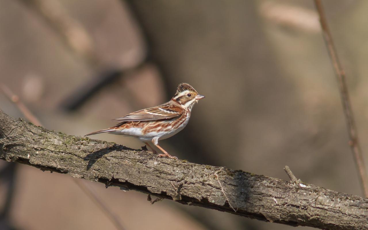 河川敷で見た鳥さん_a0052080_20321010.jpg