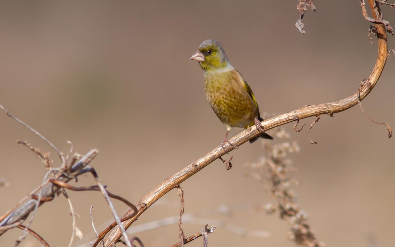 河川敷で見た鳥さん_a0052080_20323528.jpg