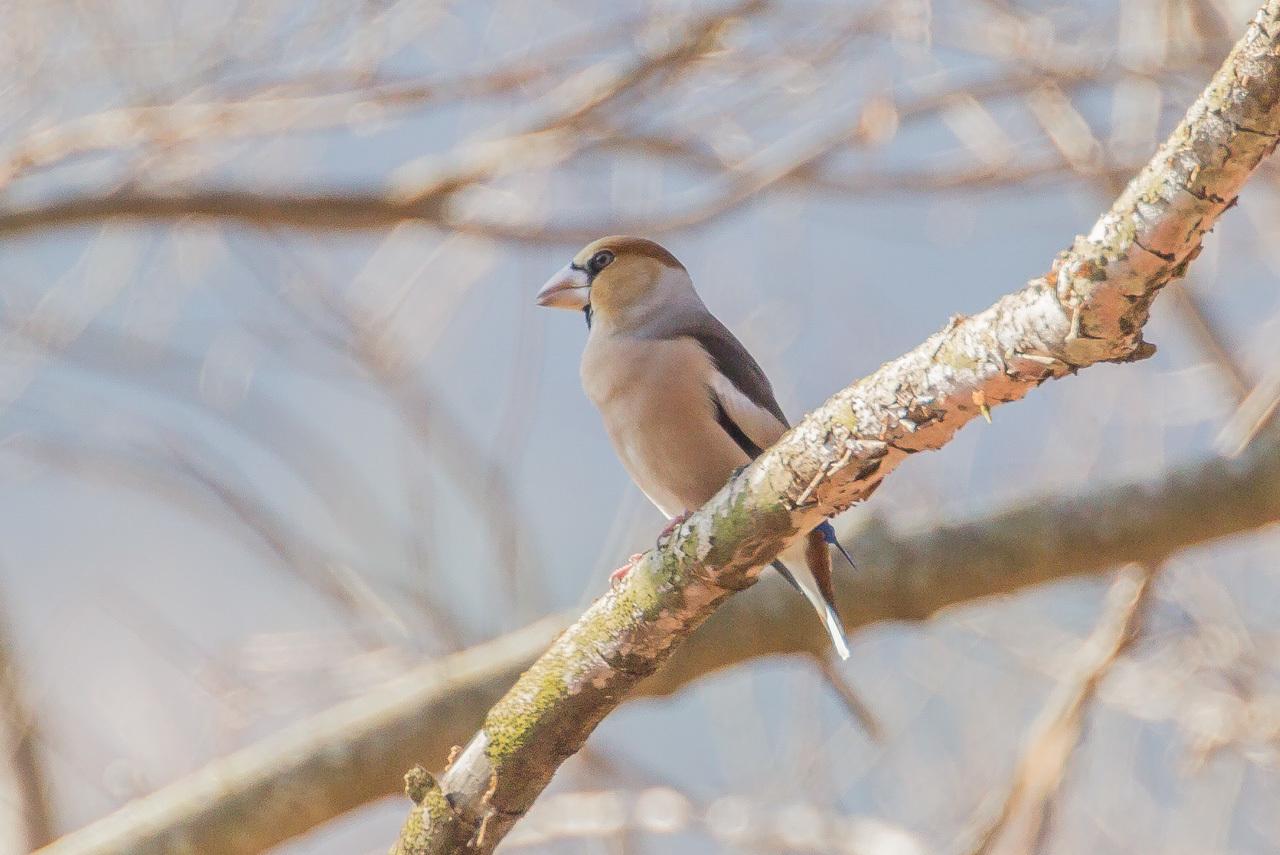 河川敷で見た鳥さん_a0052080_22020464.jpg