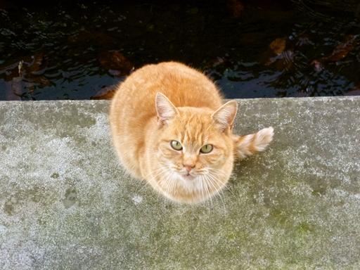 窓辺にやってくる猫たち_d0366590_16160700.jpg