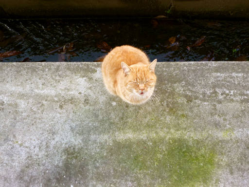 窓辺にやってくる猫たち_d0366590_16160719.jpg