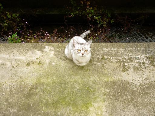 窓辺にやってくる猫たち_d0366590_16160768.jpg