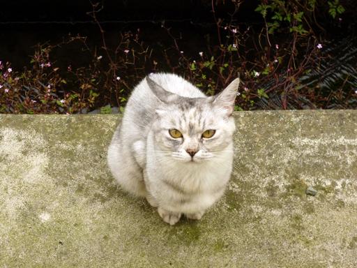 窓辺にやってくる猫たち_d0366590_16160774.jpg