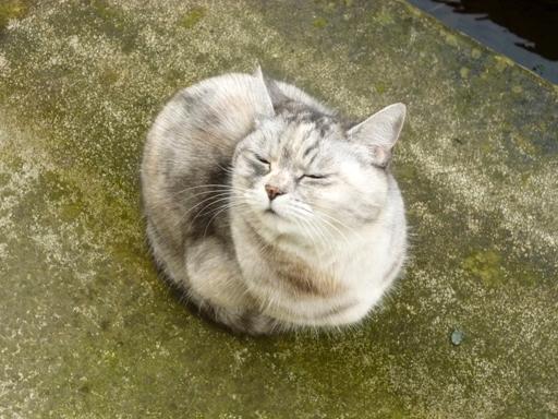 窓辺にやってくる猫たち_d0366590_16292292.jpg