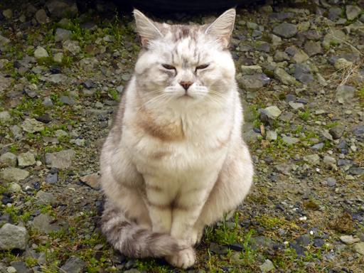 窓辺にやってくる猫たち_d0366590_16312305.jpg