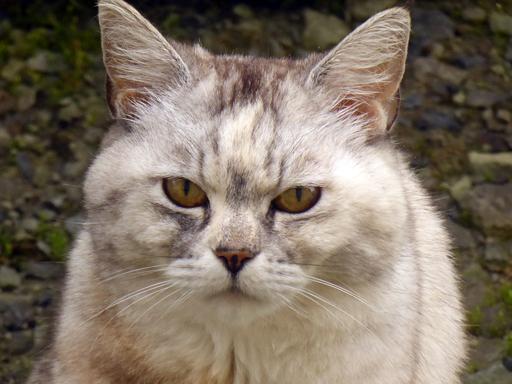 窓辺にやってくる猫たち_d0366590_16312318.jpg