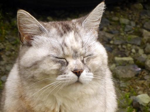 窓辺にやってくる猫たち_d0366590_16312372.jpg