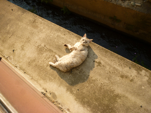 窓辺にやってくる猫たち_d0366590_16370736.jpg