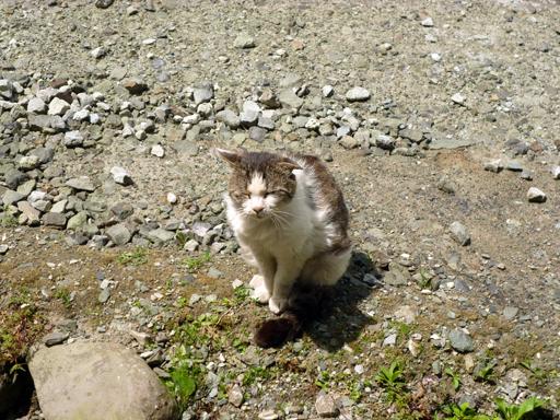 窓辺にやってくる猫たち_d0366590_16412772.jpg