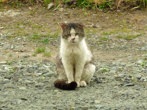 窓辺にやってくる猫たち_d0366590_16450203.jpg