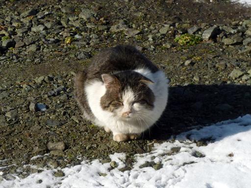 窓辺にやってくる猫たち_d0366590_16450349.jpg