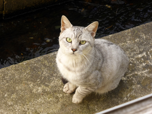窓辺にやってくる猫たち_d0366590_16532906.jpg