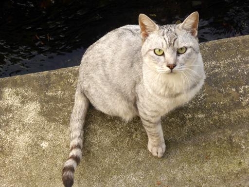窓辺にやってくる猫たち_d0366590_16532955.jpg