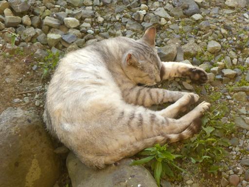 窓辺にやってくる猫たち_d0366590_17000463.jpg
