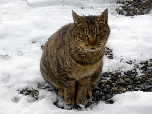 窓辺にやってくる猫たち_d0366590_17045415.jpg