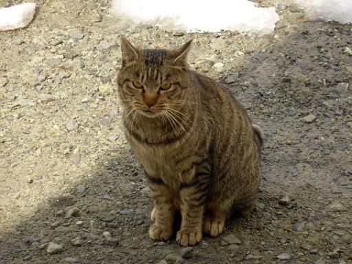 窓辺にやってくる猫たち_d0366590_17045419.jpg