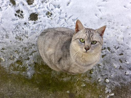 窓辺にやってくる猫たち_d0366590_18284578.jpg