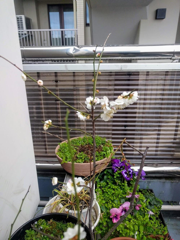 梅の花@神楽坂店_f0017300_18325085.jpg