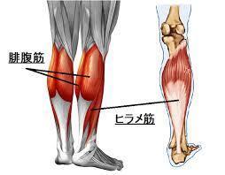 体を整えるために柔軟性を高める(準備運動⑧)_d0358103_16480073.jpg