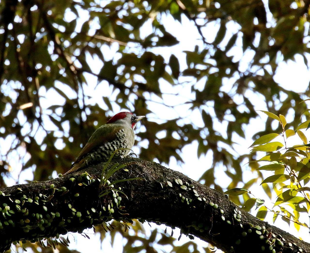 山間で出会った野鳥たちを・・・_c0213607_23020966.jpg