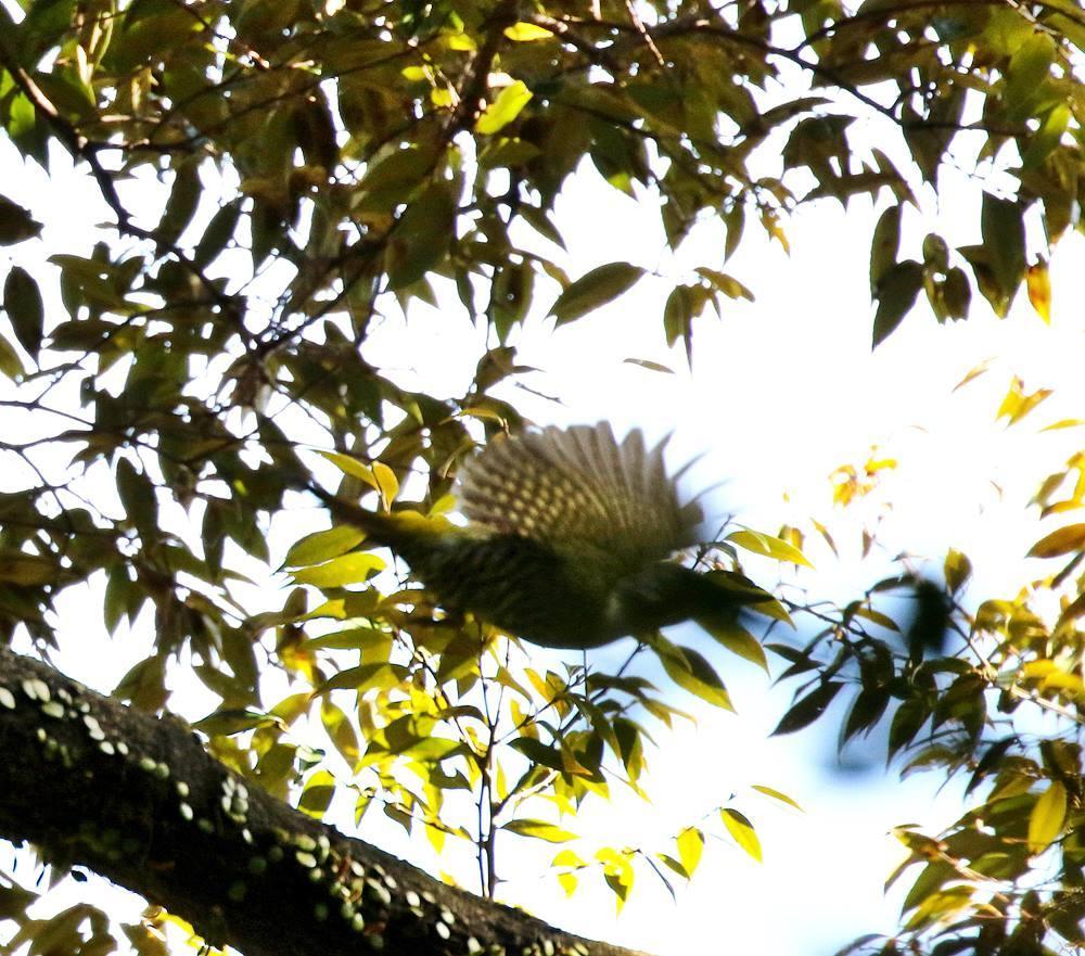 山間で出会った野鳥たちを・・・_c0213607_23023142.jpg