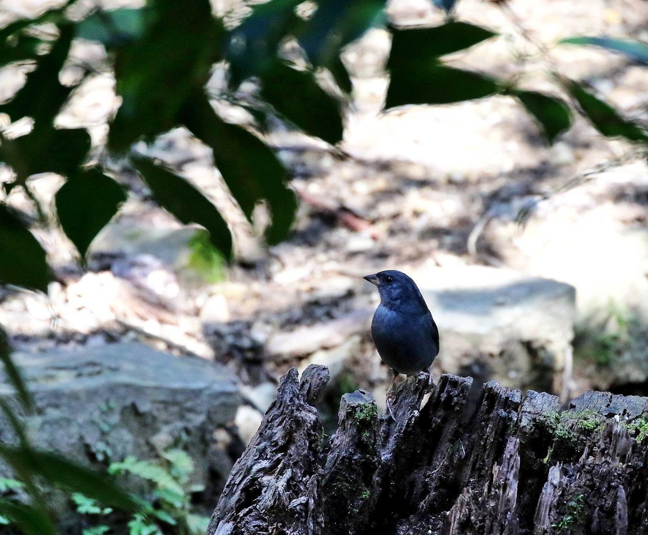 山間で出会った野鳥たちを・・・_c0213607_23023629.jpg