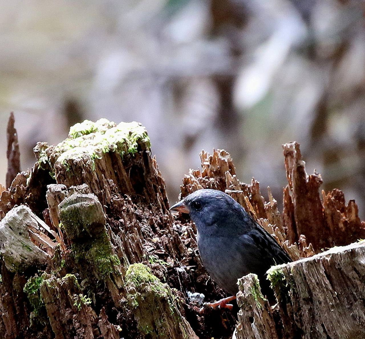 山間で出会った野鳥たちを・・・_c0213607_23024941.jpg