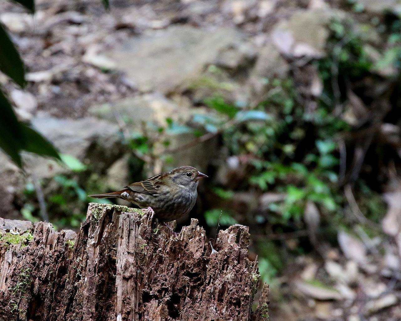 山間で出会った野鳥たちを・・・_c0213607_23025424.jpg