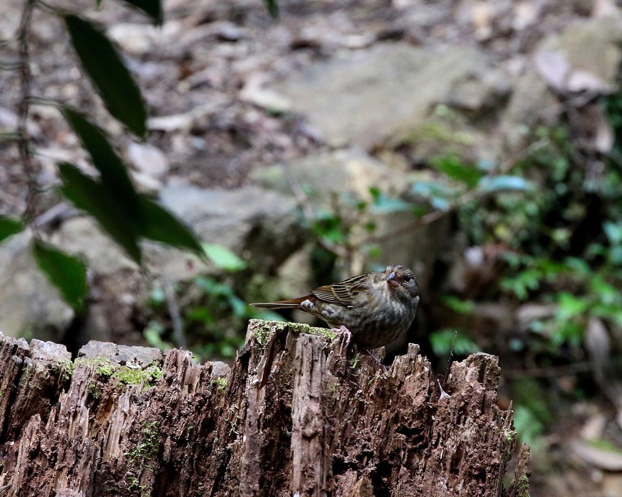 山間で出会った野鳥たちを・・・_c0213607_23025923.jpg
