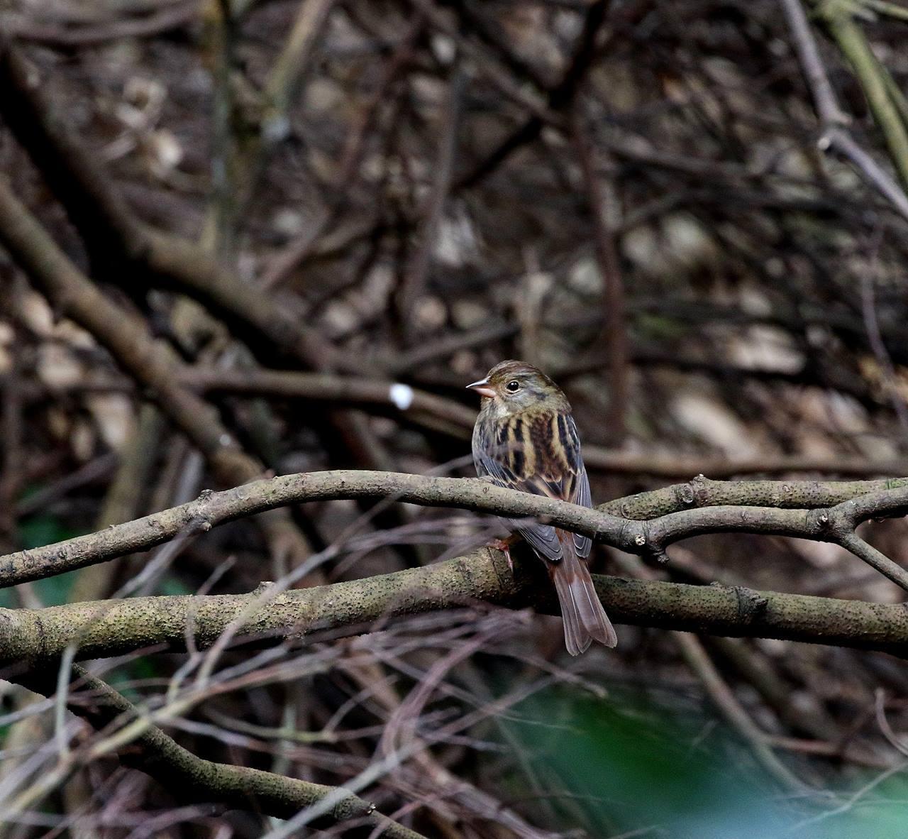 山間で出会った野鳥たちを・・・_c0213607_23033045.jpg