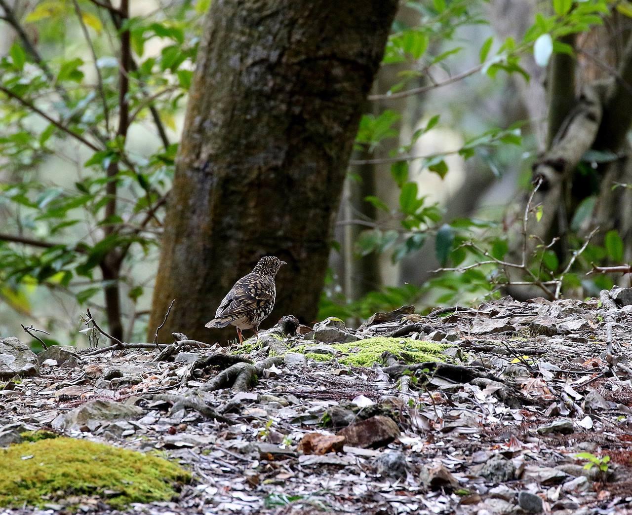 山間で出会った野鳥たちを・・・_c0213607_23033460.jpg