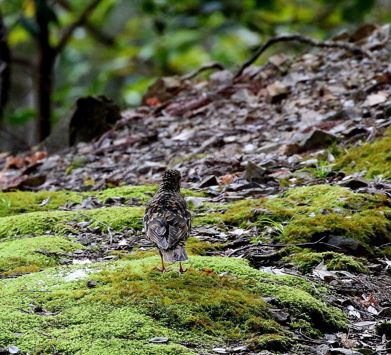 山間で出会った野鳥たちを・・・_c0213607_23033951.jpg