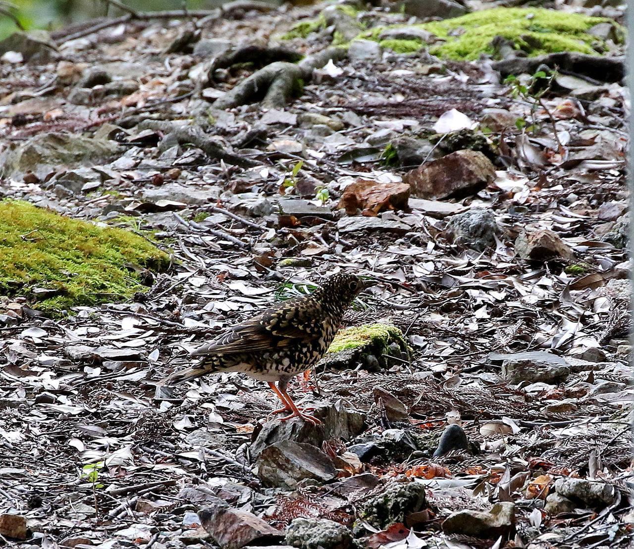 山間で出会った野鳥たちを・・・_c0213607_23034893.jpg
