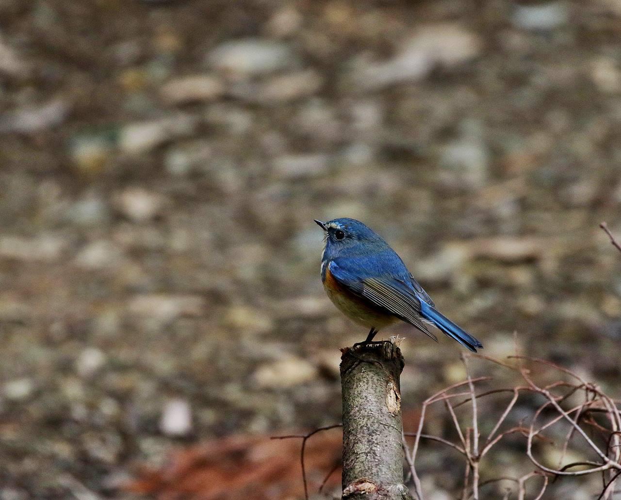 山間で出会った野鳥たちを・・・_c0213607_23035386.jpg