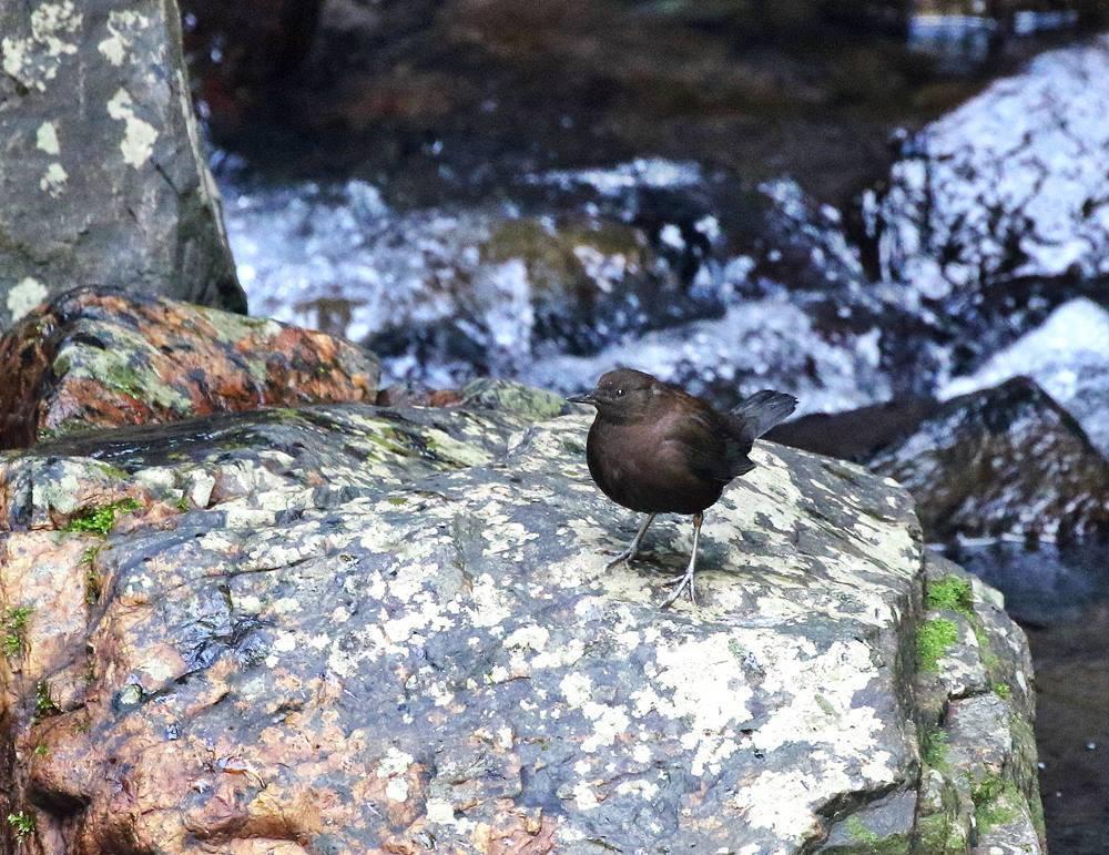 山間で出会った野鳥たちを・・・_c0213607_23050084.jpg