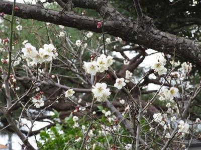速い春のおとづれ_b0369813_09215098.jpg