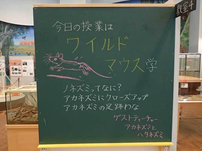 多摩動物公園・2020干支企画展「ちゅうげっ歯類展」その3~ノネズミとイエネズミ_b0355317_21345333.jpg
