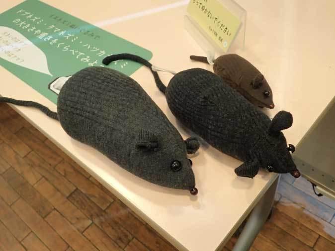 多摩動物公園・2020干支企画展「ちゅうげっ歯類展」その3~ノネズミとイエネズミ_b0355317_21553977.jpg