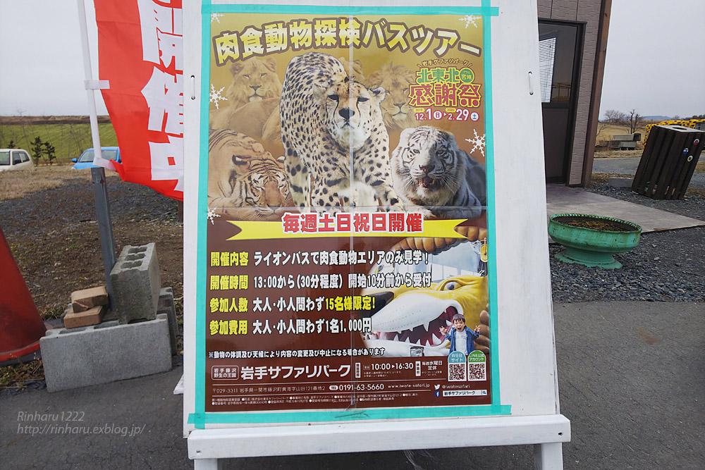 2020.2.22 岩手サファリパーク☆肉食動物探検バスツアー~ホワイトタイガーのマハロくん編_f0250322_1733755.jpg
